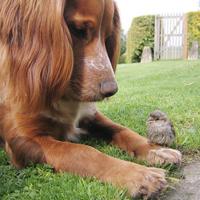 Human Dog And Cat Saliva Toxic To Birds